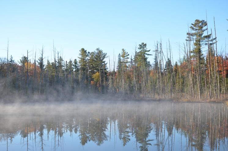 Misty marsh, just off Highway 60