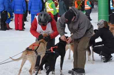 Safety first - volunteers ensuring dogs are firmly in place